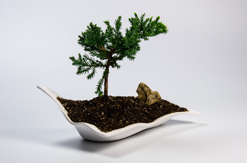 bonsai_journal-10